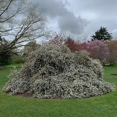 April 2019 (aplaceinthesea) Tags: england garden audley end springtime