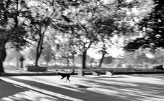 (sharmi_diya06) Tags: street streetphotography streetphot abstract letsexplore outside travel blackandwhite dog man morning light shadows shadow natgeoyourshot natgeophotographers natgeophotographer yourshotnatgeo