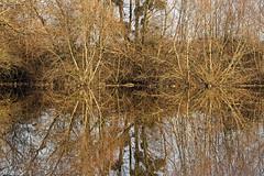 Reflets hivernal (ptit fauve) Tags: saintaignandegrandlieu loireatlantique paysdelaloire 44 lacdegrandlieu lac arbres couleurs bois eau reflets eaudouce branches nikon nikond850 nikkor 70200mmf28 nature