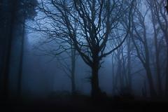 Hembury Fort, Honiton, Devon - Jan 2020 (Dis da fi we) Tags: hembury morning mist misty fort devon honiton english heritage monument army iron roman age circuit period defences neolithic scheduled
