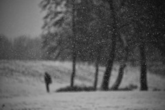 Fade to white~ (~mimo~) Tags: canon nature trees blackandwhite südpark volksgarten winter snow blur deutschland germany