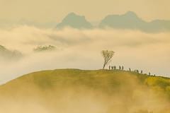 _MG_8346.0212.Tân Lập.Mộc Châu.Sơn La (hoanglongphoto) Tags: asia asian vietnam northvietnam northernvietnam northwestvietnam landscape scenery vietnamlandscape vietnamscenery mocchaulandscape morning nature sunny sunnymorning morningsunshine mist earlymorningfog hill ridge ridgehill sky mountain mountains vietnamnature canon tâybắc sơnla mộcchâu tânlập thiênnhiên phongcảnh phongcảnhmộcchâu buổisáng buổisángmộcchâu sươngmù sươngsớm nắng nắngsớm nắngsớmmộcchâu nhữngngọnđồi núi dãynúi bầutrời happyplanet asiafavorites minimalisme minimalistlandscape naturelandscape phongcảnhthiênnhiên hoanglongphoto tree people landscapeandpeople cây phongcảnhcóngười canoneos5dmarkii canonef100400mmf4556lisusm forest theforest earlysunshine