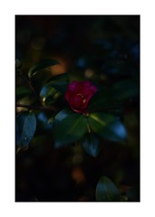 This work is 14/15 works taken on 2019/11/24 (shin ikegami) Tags: sony ilce7m2 a7ii sonycamera 50mm lomography lomoartlens newjupiter3 tokyo 単焦点 iso800 ndfilter light shadow 自然 nature naturephotography 玉ボケ bokeh depthoffield art artphotography japan earth asia portrait portraitphotography