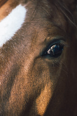Soul Eye (Robycrux) Tags: horse stable stall shed byre stalla circolo ippico cisi imola italy soul eye ride beauty winter mood atmosphere touch sony 50mm