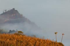_MG_8813.0212.Tân Lập.Mộc Châu.Sơn La (hoanglongphoto) Tags: asia asian vietnam northvietnam northernvietnam northwestvietnam landscape scenery vietnamlandscape vietnamscenery mocchaulandscape morning nature sunny sunnymorning morningsunshine mist earlymorningfog hill mountain mountains vietnamnature canon tâybắc sơnla mộcchâu tânlập thiênnhiên phongcảnh phongcảnhmộcchâu buổisáng buổisángmộcchâu sươngmù sươngsớm nắng nắngsớm nắngsớmmộcchâu núi bầutrời happyplanet asiafavorites minimalisme minimalistlandscape naturelandscape phongcảnhthiênnhiên hoanglongphoto tree cây canoneos5dmarkii canonef100400mmf4556lisusm