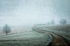 The curve (Rita Eberle-Wessner) Tags: landscape landschaft nebel fog foggy neblig weg path feldweg winter frost hoarfrost raureif wiese wiesen meadow meadows zaun fence curve kurve baum tree bäume trees odenwald texture textur art kunst thecurve