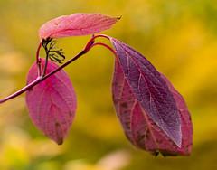 Nature. (ost_jean) Tags: natuur herfst nature nikon d5300 tamron sp 90mm f28 di vc usd macro 11 ostjean colors autumn bokeh