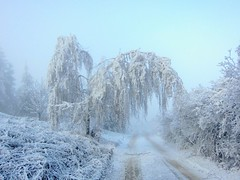 in the winter kingdom (majka44) Tags: winter tree road snow fog frozen white cold slovakia landscape nature light day memory birch