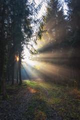 Lightweight (der_peste (on/off)) Tags: woods woodland forest forestscape raysoflight raysofgod lightrays sunrays godrays timberland timber soil duff moss sunbeams sunbeam sunlight sunstar