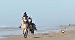 Looking towards 2020 (Le.Patou) Tags: aquitaine médoc vensac fz1000 water sea seaside shore seashore coast horse dog ride sand blue