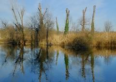 Mirroring (Radu Andrei B) Tags: reflections mirror lake romania bucharest winterlight colors park tineretului