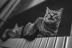 猫 (fumi*23) Tags: ilce7rm3 sony sel35f18f emount 35mm feline fe35mmf18 a7r3 animal alley cat chat gato neko katze bnw bw monochrome blackandwhite ソニー ねこ 猫 モノクロ