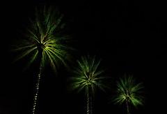 Palms Three (Darren LoPrinzi) Tags: 5d fl canon canon5d florida miii stpetersburgfl stpete saintpetersburg saintpetersburgfl palm palmtree palmtrees light 3 three shadows shadow dark minimal minimalism lessismore green uplight