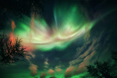 The Northern sky (yan08865) Tags: alaska nightphotography fairbanks wow outdoor nature winter pavlis landscapes night borealis lights northern natural colors pics photos shots alaskan usa aurora sky tree forest wild stars solo travel light wide wideangle