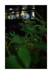 This work is 3/15 works taken on 2019/11/30 (shin ikegami) Tags: sony ilce7m2 a7ii sonycamera 40mm voigtlander nokton nokton40mmf14sc tokyo 単焦点 iso800 ndfilter light shadow 自然 nature naturephotography 玉ボケ bokeh depthoffield art artphotography japan earth asia portrait portraitphotography