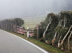 IMG_20200102_102417 (eduard43) Tags: rafz unfall hirsche gehege bergstrasse 2020