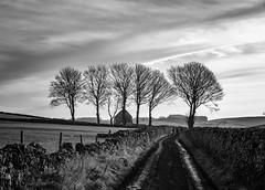 Reynards Lane (l4ts) Tags: landscape derbyshire peakdistrict whitepeak hartington reynardslane trees walkers drystonewalls blackwhite monochrome