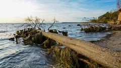 Unterwegs auf der Insel Poel  (15) (berndtolksdorf1) Tags: deutschland mecklenburgvorpommern inselpoel ostsee meer wasser strand bäume himmel outdoor
