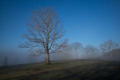 between fog & sun (Toni_V) Tags: leica rangefinder digitalrangefinder messsucher m2402921 mist tree fog nebel hiking 28mm mp wanderung leicam elmaritm12828asph jurahöhenweg type240 typ240 hauensteinbelchenflueoensingen schweiz switzerland europe suisse svizzera baum solothurn 2019 svizra 191230 ©toniv