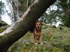 Im Feen-Land :-) (isajachevalier) Tags: hund dog tier haustier mischling natur landschaft sächsischeschweiz elbsandsteingebirge sachsen panasonicdmcfz150