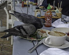 It Could Use A Little More Salt (Steve Mitchell Gallery) Tags: birds animals malibufarm pier malibu eat dine diners dives restaurants breakfast coffee morningcoffee street