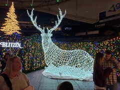 Enchant Christmas (heytampa) Tags: enchantchristmas tropicanafield holidaylights decorations reindeer cheryl fitzpatrick hey