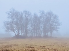 Photo of Trees in the mist, Lamberts Castle