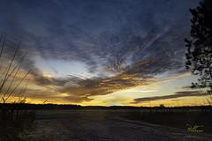 First Sunrise - 1-2-2020 (turknc) Tags: camden clouds colors goldenlight grass january2020 mailbox morning morninglight nikond5500 northcarolina outside pictureaday pictureoftheday road silhouette sky sunrise tamron18200mmf3563diiivcb018n trees unitedstatesofamerica landscape photo