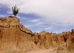 Dentro del desierto, Desierto de la tatacoa (Engalochadox) Tags: desierto colombia americadelsur america suramrerica calor sol arena seco dry desert sand sun liberdad panorama panoramica hot heat tatacoa huila interior captus