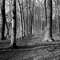 path (salparadise666) Tags: zeiss super ikonta b 53216 opton tessar 80mm fomapan 100 boxspeed caffenol cl 30min nils volkmer folding analogue medium format camera vintage square 6x6 landscape bw black white monochrome hannover region niedersachsen germany