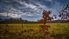 Winterlandschaft Westrügen (Rüganer Egon) Tags: 2019 landow samtens inselrügen vorpommern mecklenburgvorpommern deutschland landscape landschaft rüganeregon