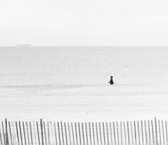 L1000548-Edit (John F. Roberts) Tags: leicasl2 90mm ssummicronsl apo beach long island park ew york winter black white bw