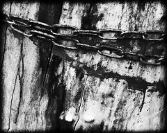 bw abstract with chain (Pomo photos) Tags: chain blood horror scary wood tree metal noir blackandwhite blackwhite bw monochrome mono mood expressionism impressionism minimalism old decay abandoned surreal fujifilm xe2 fujifilmxe2 paint abstract abstraction