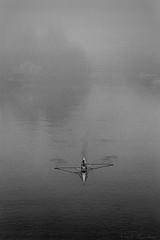 Rameuses dans la brume (fred.guidoni) Tags: leicam6 summicron50mmf2 kodaktrix400 reflectaproscan10t vuescan nantes