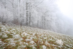 Foggy beauty (tom.leuzi) Tags: fog mist frozen ice nature landscape tree forest nebel wald baum canonef1635mmf4lisusm canoneos6d switzerland