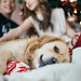Little boy brother with sister are sitting near the Christmas tree with dog and smiling. Golden retriever  closeup.