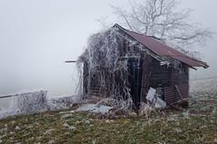 Yet another year... (tom.leuzi) Tags: baum canonef1635mmf4lisusm canoneos6d nebel fog frost frozen house ice mist tree hut hütte old broken