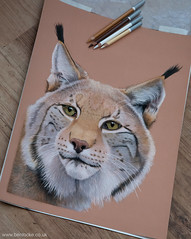 Drawing - European Lynx (Ben Locke.) Tags: lynx europeanlynx pastel pencil art drawing sketch cat bigcat wild wildlife nature draw wildlifeart