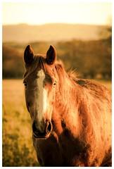 Horse in the hills (jamesdewar99) Tags: portrait horse light canon winter animal farm scotland
