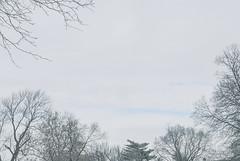Sky (2 Jan 2020) (jolynne_martinez) Tags: sky gray grey blue tree trees clouds cloudy winter day photoshop oilpainting pointillize pixelate pixellated nikkor nikon nikond60 utata:project=tw715