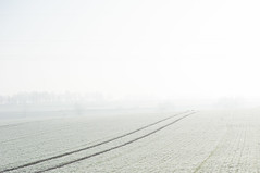 Three crows (auqanaj) Tags: crow crows krähen nebel fog frost feld field acker neujahr newyear landscape landschaft