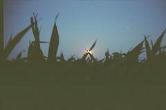 Moon (atmosphere in the sky) Tags: film night cornfield nature 35mm odesa ukraine moonrising tgp