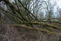 Friesche Veen (Jeroen Hillenga) Tags: friescheveen drenthe frieseveen netherlands nederland natuur nature natuurgebied natur natuurmonumenten