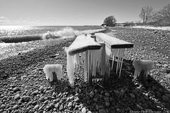 10278 (ontario photo connection) Tags: water lakeontario courtice blackandwhite ontario canada