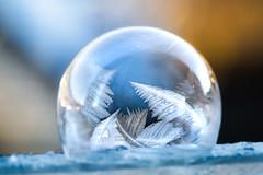 Frozen bubble (Steffen Walther) Tags: 2020 fotografjena fotografthã¼ringen jena steffenwalther bubble canon100mm28ismacro canon5dmarkiii cold crystal eis eiskalt eiskristall freeze frost frozen gefroren gefroreneseifenblase ice kalt kristalle macro nahaufnahme seifenblase soapbubble winter