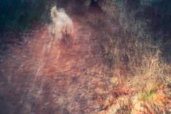 Walking The Dog no.2 (DavidSenaPhoto) Tags: impressionisticphotography icm fujinon35mmf14 intentionalcameramovement carverpond dog fuji walking xt2 lake impressionism fujifilm walk