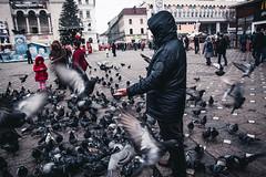 Birdman (petrovicka95) Tags: timisoara street bird pigeon city winter birds people mood fly nikon