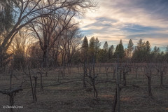 The Lay of the Land (buffdawgus) Tags: vineyard california primelens landscape nevadacity sierranevadafoothills cementhilroad canon5dmarkiii lightroom6 canonef35mmf2isusm topazstudio winter 35mm nevadacounty sunset