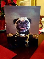 Happy New Year and Happy Birthday to me! (geraldbrazell) Tags: pug banditthepug dog guiltypug dogportraiture puginvogue