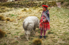 Young girl with her lama (marko.erman) Tags: peru perurail train abralaraya latinamerica southamerica highaltitude pass travel journey girl tradition traditional lama portrait